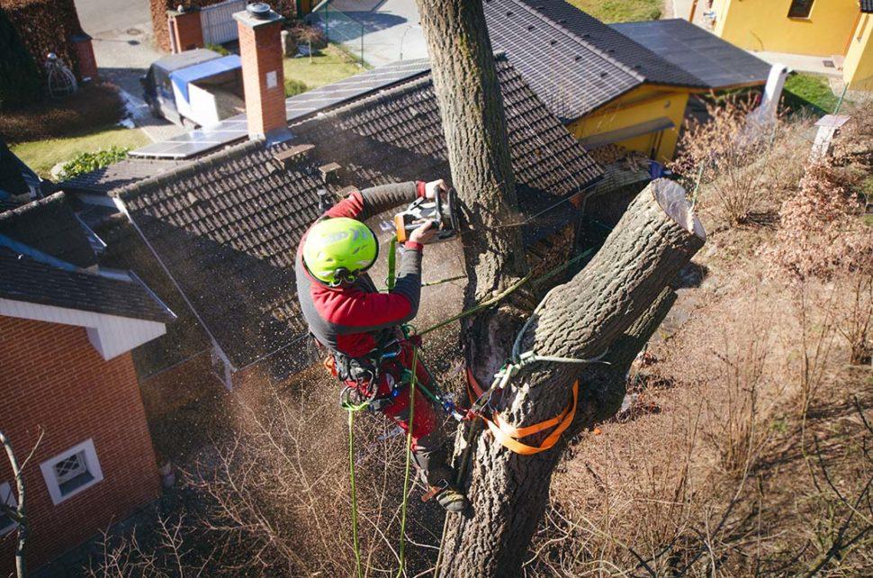 Chainsaw safety procedures