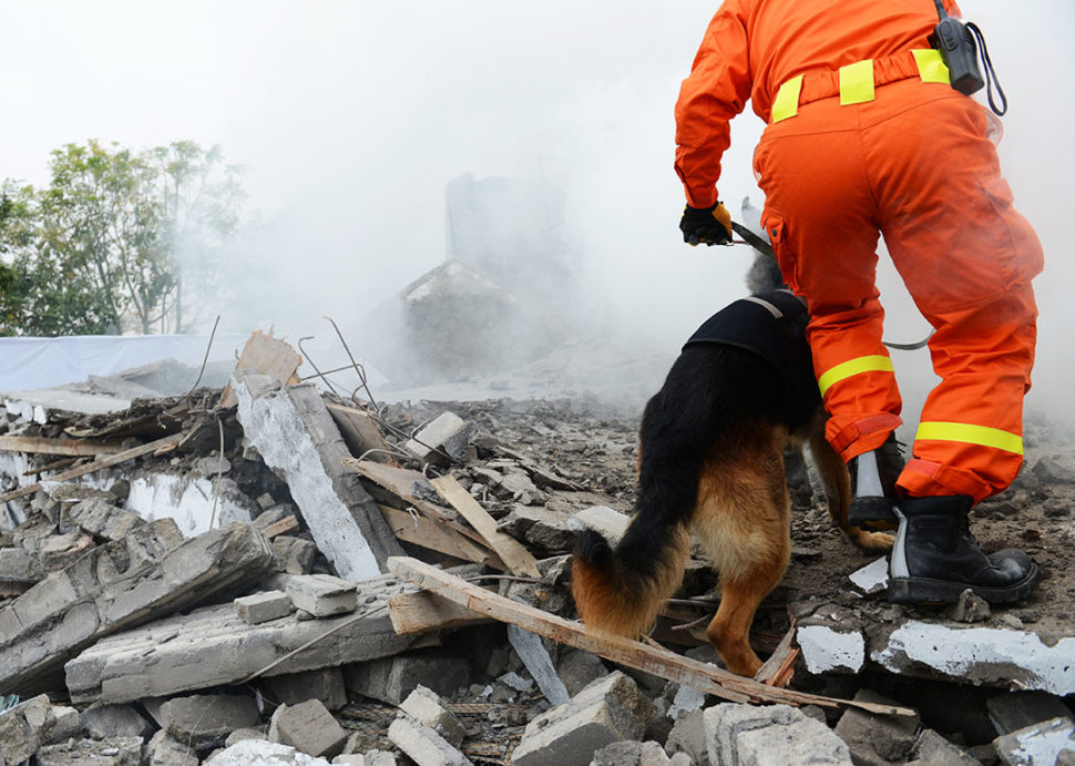 Dog and handler searching earthquake debris