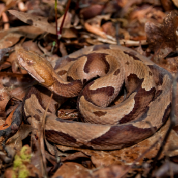 Snake camouflaged in leaves