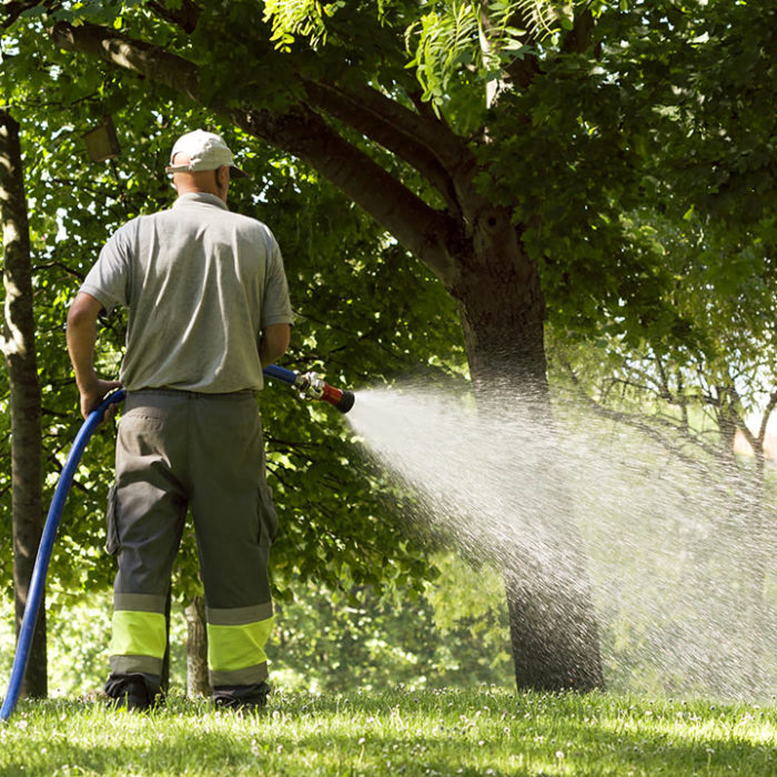 Municipality worker watering lawn